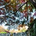 Photos: 高取城跡紅葉02