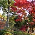 Photos: 大和民族公園紅葉13