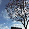大和民族公園紅葉12
