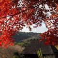 Photos: 大和民族公園紅葉05