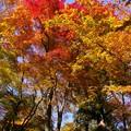 Photos: 談山神社紅葉15