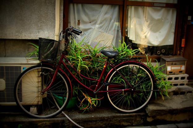 アロエ自転車