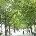 Photos: 大阪 中之島♪