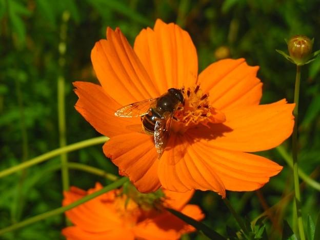岡野公園 蜂と花