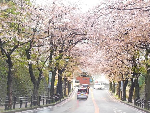 逗子市桜山♪