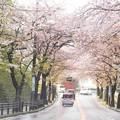 写真: 逗子市桜山♪