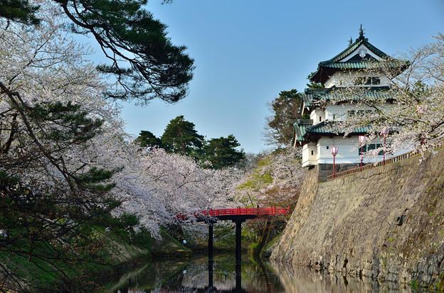 弘前公園・桜の頃 (5)