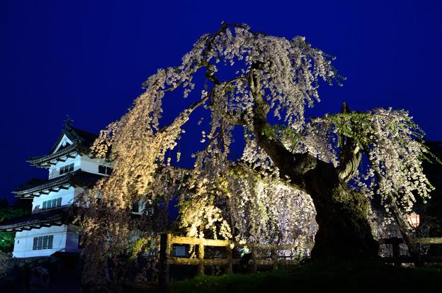 弘前公園・夜桜見物 (2)