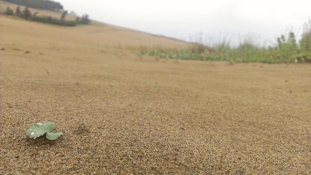 写真: 鳥取砂丘 被写体が無い