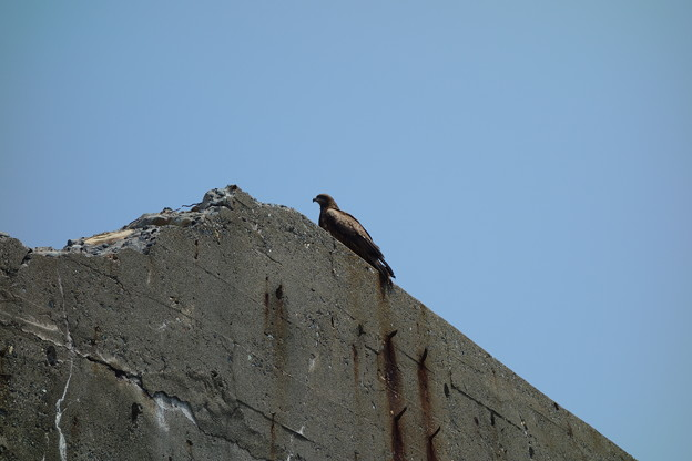 軍艦島の廃墟の止まる鳥