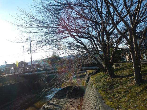 写真: 05021_9482