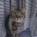 Photos: ニコは・・・