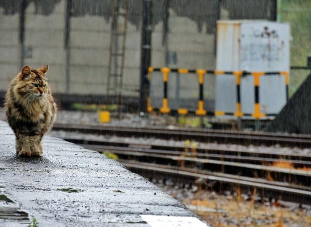 雨の駅ネコ?