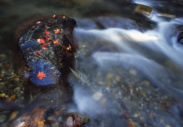 Photos: 晩秋の渓流