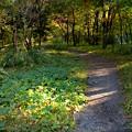 木漏れ日の小道