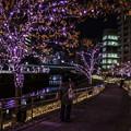 Photos: 冬の桜4