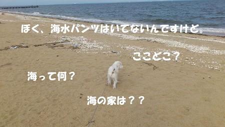 DSC_012111