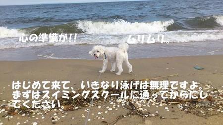 DSC_0126111