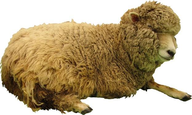 羊縮小用3