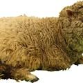 Photos: 羊縮小用3