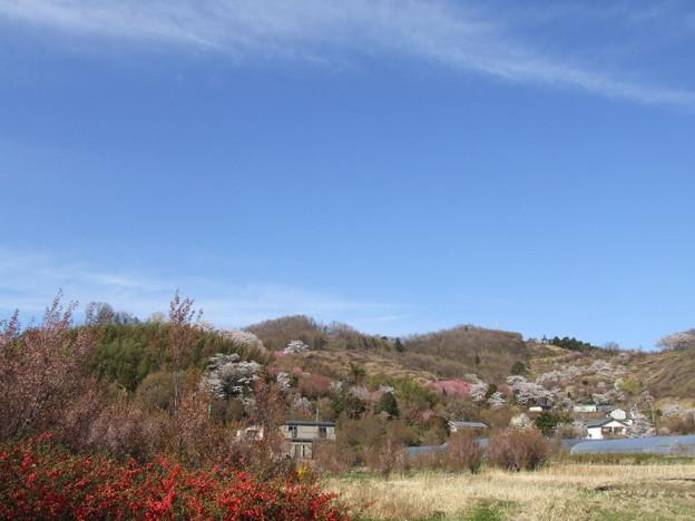 0058 花見山公園