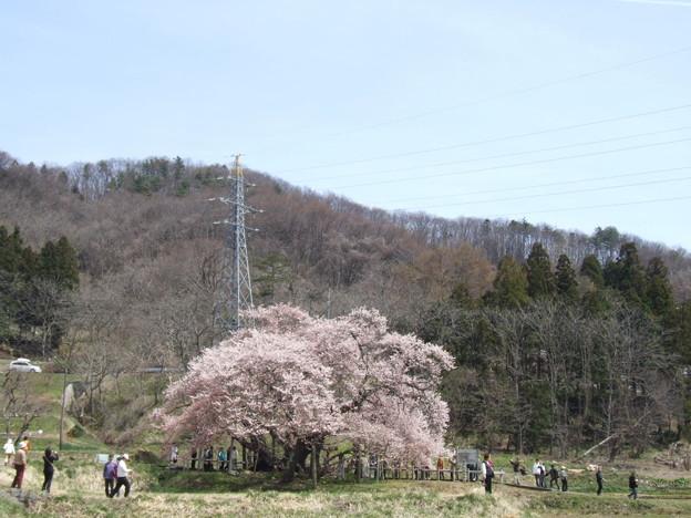 0182 石部桜