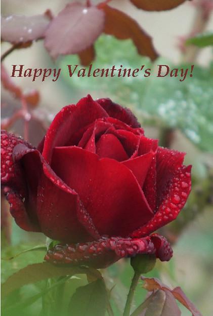 Valentine6