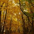 Photos: 秋の森浴