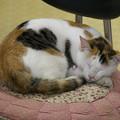 Photos: 借りてきた猫