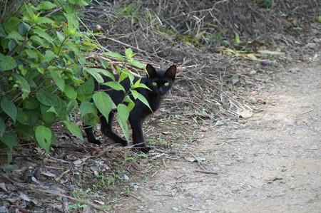 黒猫さんに誘われて・・・