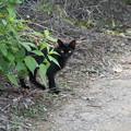 写真: 黒猫さんに誘われて・・・