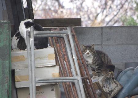 白黒親子とビリケン猫