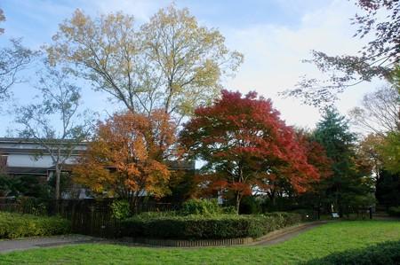 左:目薬の木(メグスリノキ) 右:いろは紅葉(イロハモミジ)