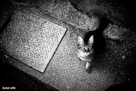 街猫103