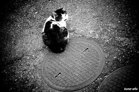 街猫104