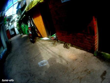 街猫117