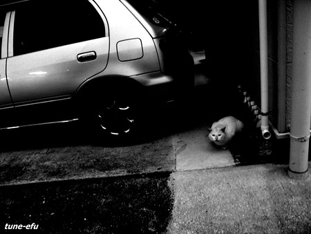 街猫124