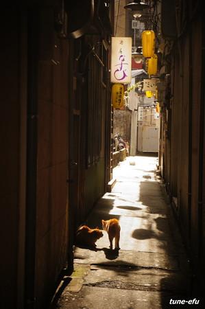 街猫140