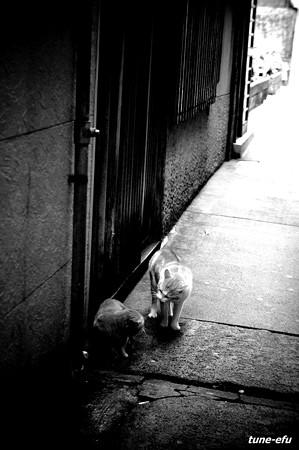 街猫144