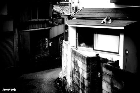 街猫145