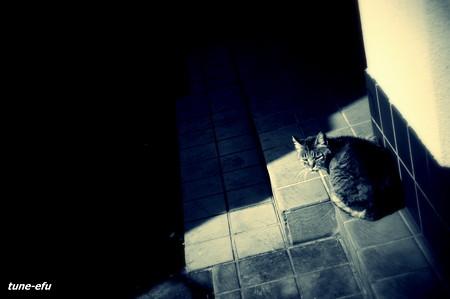 街猫174