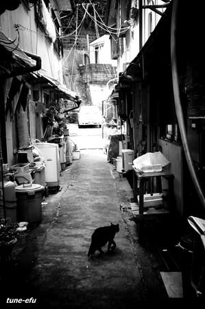 街猫189