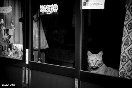 街猫190