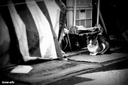 街猫200