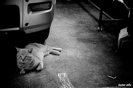 街猫202
