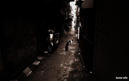 街猫205