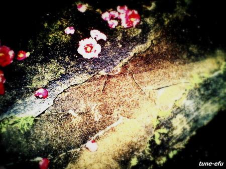 苔の緑と椿の赤