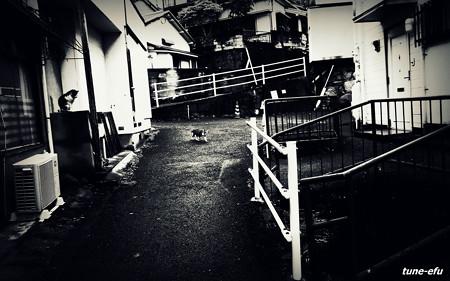 街猫211