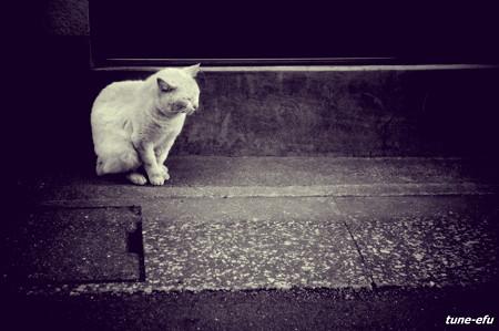 街猫212