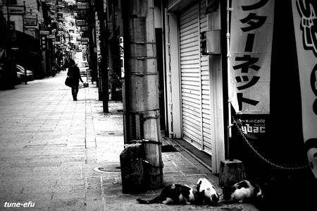 街猫219